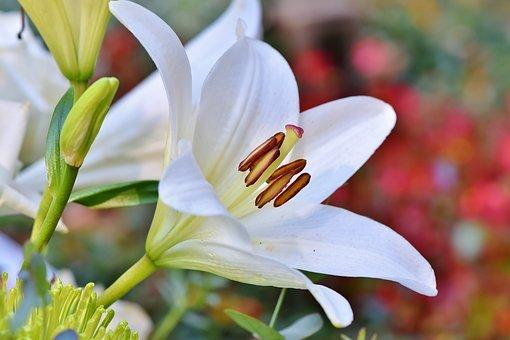 Quelles plantes choisir pour votre petit jardin?