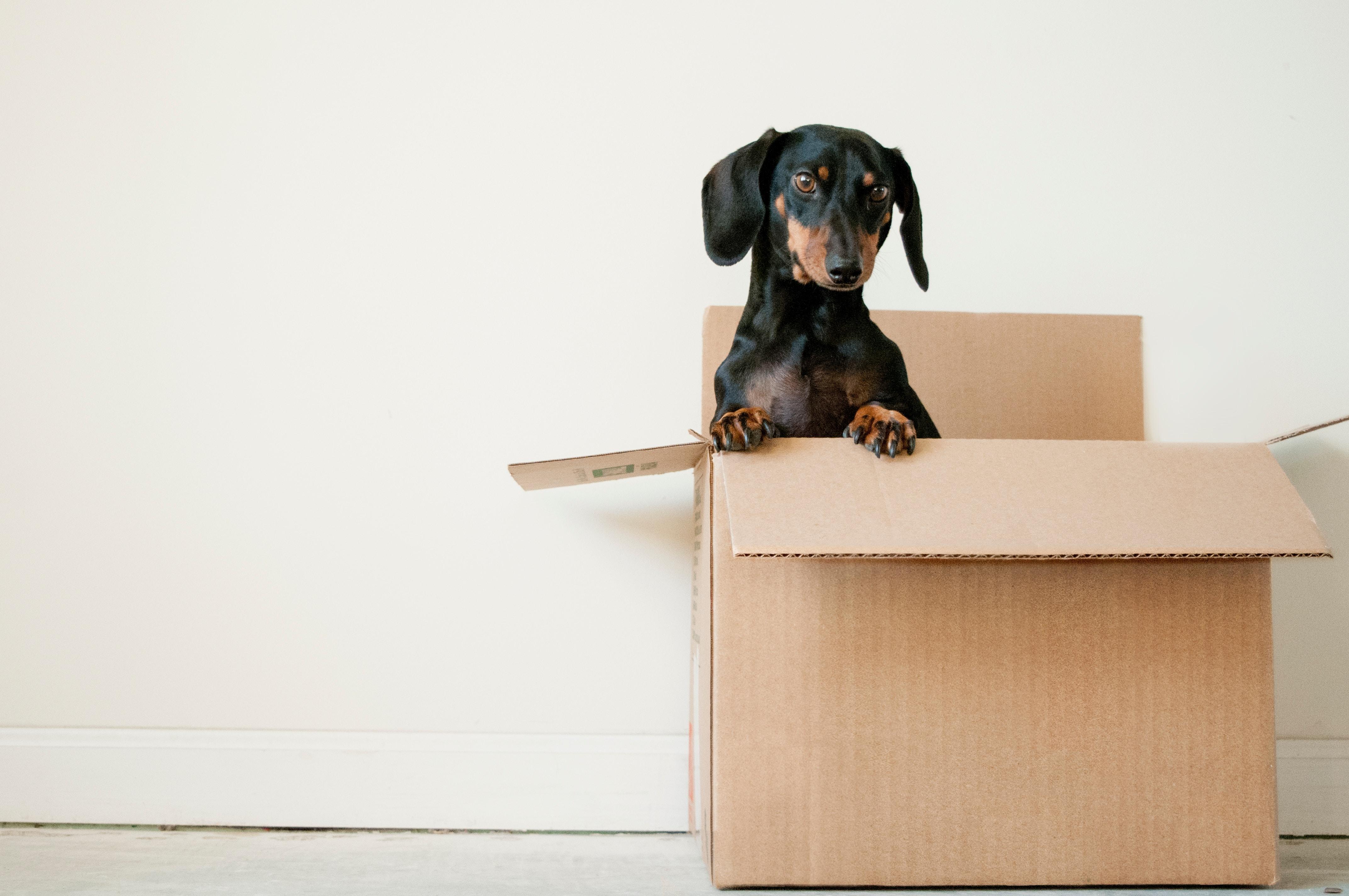 Vous déménagez et vous ne savez pas qui contacter pour bouger vos meubles ?